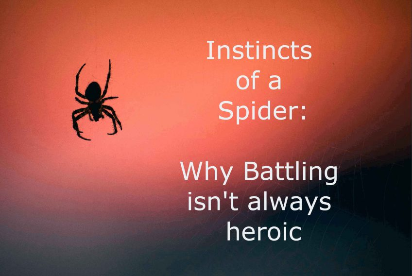 Battling Isn't Always Heroic: Instincts Of A Spider