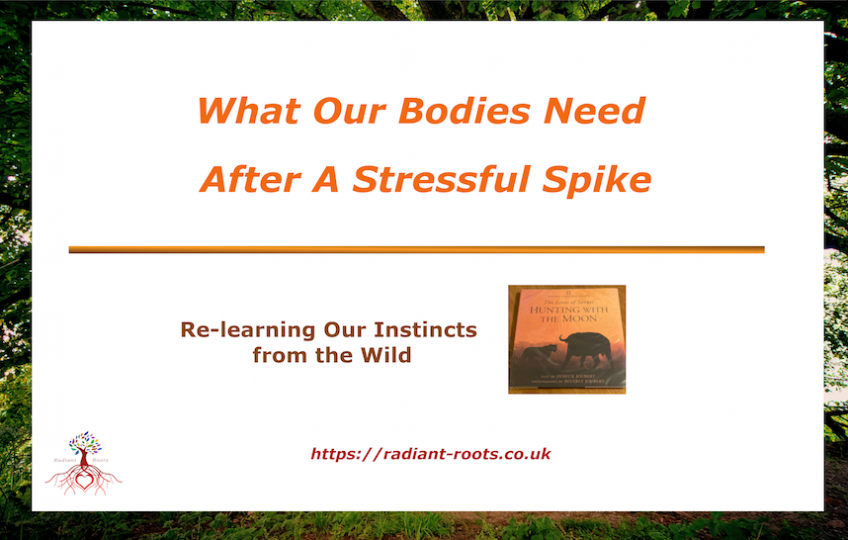 What Our Bodies Need After A Stressful Spike